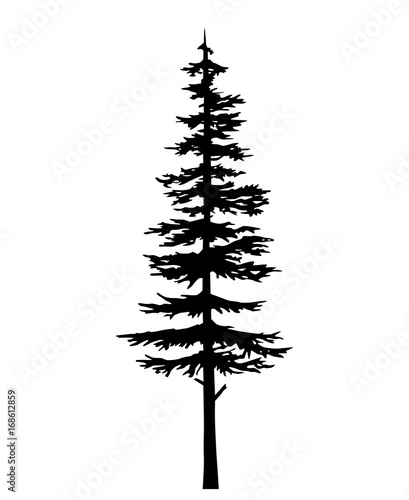 Obraz na plátně tree pine silhouette, vector isolated silhouette of a coniferous tree