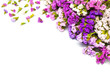 Beautiful violet flower on isolated background