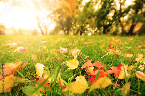 Aluminium Prints Garden Fall leaves on meadow in autumn