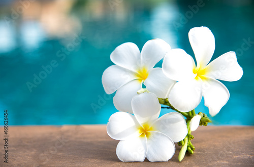 Foto auf AluDibond Plumeria Tropical frangipani white flower near the swimming pool, flower spa. Copy space.