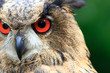 canvas print picture - Eurasian Eagle-Owl