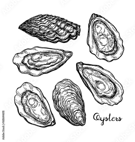 Fotografija Oysters ink sketch.