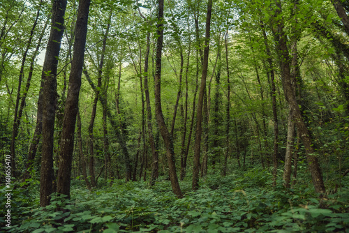 Fototapeten Wald Beautiful forest scenery
