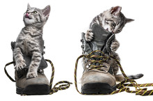 Little Kittens Playing In Shoes - Isolated
