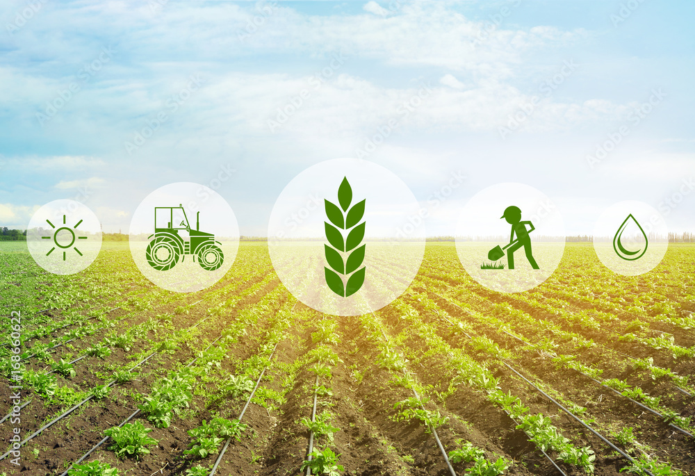 Fototapety, obrazy: Icons and field on background. Concept of smart agriculture and modern technology