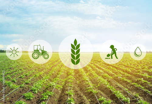 Obraz Icons and field on background. Concept of smart agriculture and modern technology - fototapety do salonu
