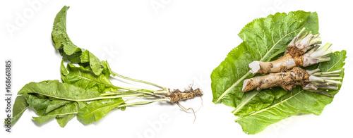 Obraz na plátně a fresh horseradish