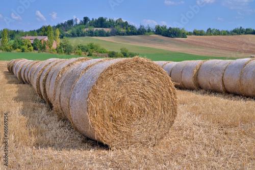 Fotografie, Obraz  due fila di balle di paglia allineate su un campo