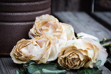 Three Faded Pink Roses On A Wo...