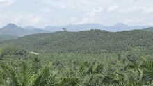 Palm Oil Plantation Over Mount...