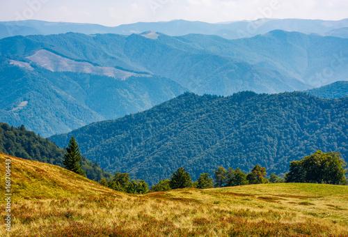 Canvastavla forest on high altitude grassy hillside