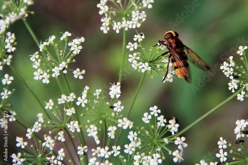 Fotografie, Obraz  insecte sur une fleur