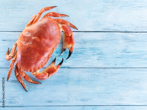 Photo  Cooked brown crab or edible crab isolated on the blue wooden table