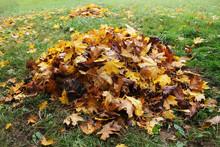 Pile Of Fallen Leaves In Autum...