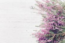 Pink Heather Flower Border (ca...