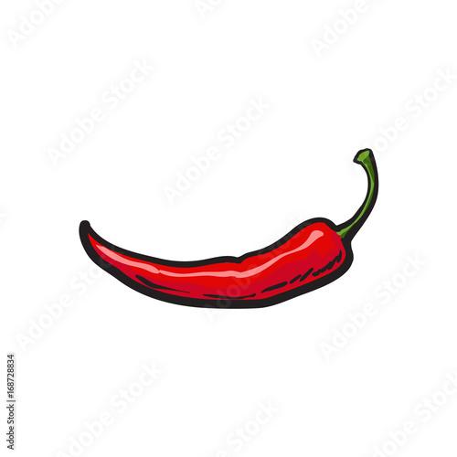Stampa su Tela Single fresh whole ripe red chili pepper, sketch style vector illustration on white background