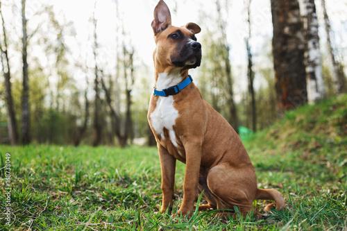 Carta da parati Adorable purebred dog in forest