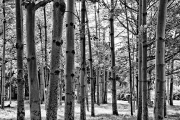 Tree line in black and white