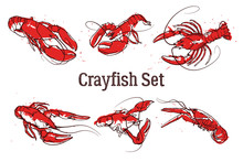 Hand Drawn Prawn Or Lobster. Text CRAYFISH SET. Sketch Grunge Vector Set Good For Pub Menu Decoration