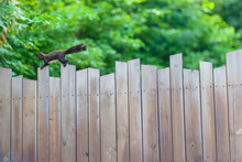 Fence And A Squirrel