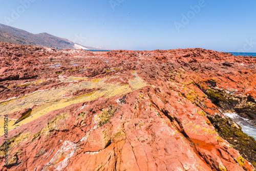 Keuken foto achterwand Rood traf. Nature of the Socotra Island, Yemen. UNESCO World Heritage