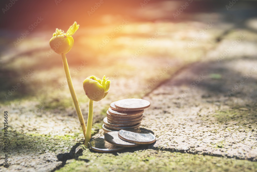 Fototapeta Young green plant with stack coin on ground for growing business financial concept.