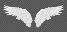 Vector Realistic Angel Wings I...