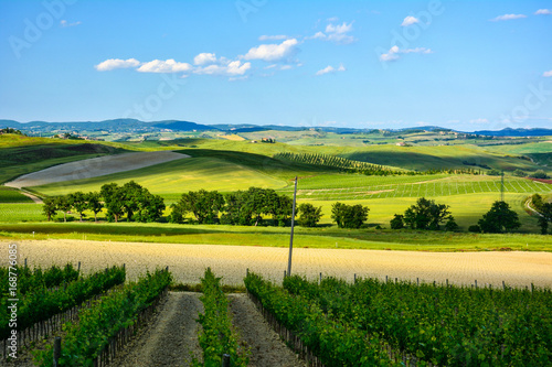 Foto op Aluminium Blauw Spring landscape in the hills of Tuscany Italy, land of Brunello wine
