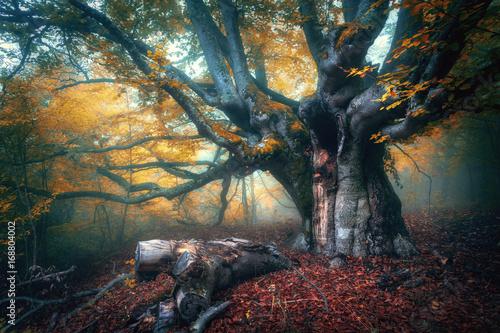 zadziwiajacy-kolorowy-krajobraz-z-mglistym-starym-drzewem-z-czerwonym-ulistnieniem