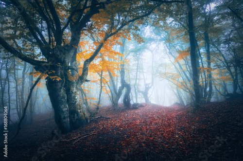 Dark fog forest. Mystical autumn forest with trail in blue fog. Old Tree. Beautiful landscape with misty trees, path, colorful yellow leaves. Nature background. Foggy forest with magical atmosphere