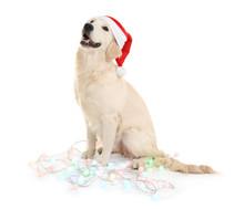 Cute Dog In Santa Hat Sitting ...
