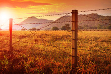 Barbed Wire Fence And And Suns...