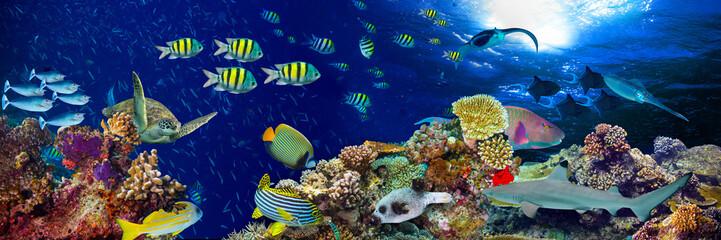 kolorowy szeroki podwodny rafa koralowa panorama transparent tło z wielu ryb żółw i życie morskie / Unterwasser Korallenriff Hintergrund