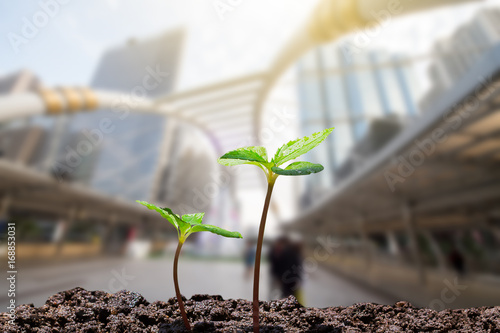 Valokuva  Young green sprouts with water drop growing up from soil on blurred city with so