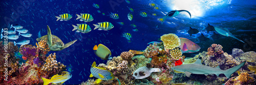 Poster Koraalriffen colorful wide underwater coral reef panorama banner background with many fishes turtle and marine life / Unterwasser Korallenriff Hintergrund