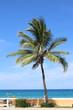 Palmier à Miamy Beach