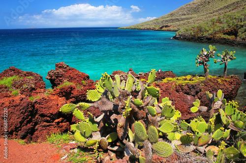 Staande foto Eiland Galapagos prickly pear on Rabida Island in Galapagos National Park, Ecuador.