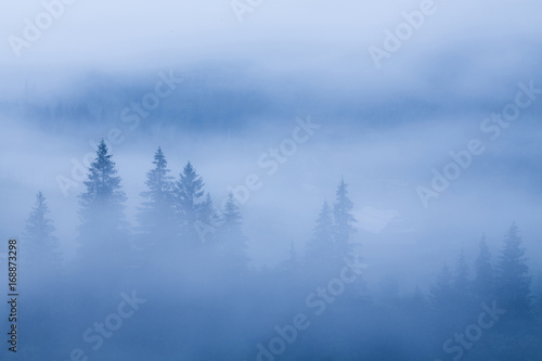 Foto op Canvas Bos fog over pine tree forest