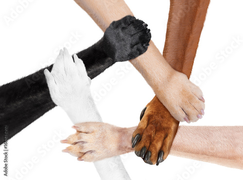 Aluminium Prints Crazy dog joined paws hands in a circle as a team
