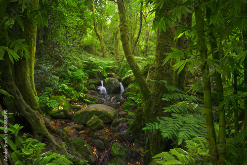 Poster Bambou Tropical jungle