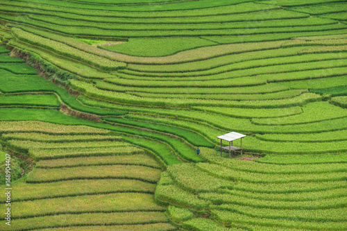 Photo sur Toile Les champs de riz Rice terrace at Tule, Mu Cang Chai is a rural district of Yen Bai Province, in the Northwest region of Vietnam have been recognized as national landscapes by the Ministry of Culture and Tourism.
