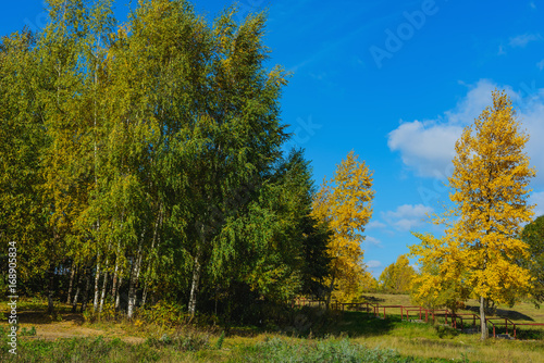 Cadres-photo bureau Arbre Park- autumn background