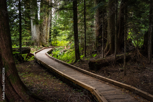 Tuinposter Weg in bos Into the Woods