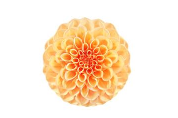 Wunderschöne Sommerblume freigestellt