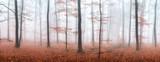 Herbstwald Panorama im Nebel - 168926859