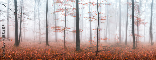 Fototapeta Herbstwald Panorama im Nebel obraz