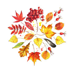 Autumn composition made of autumn leaves and berries. Watercolor sketch style background