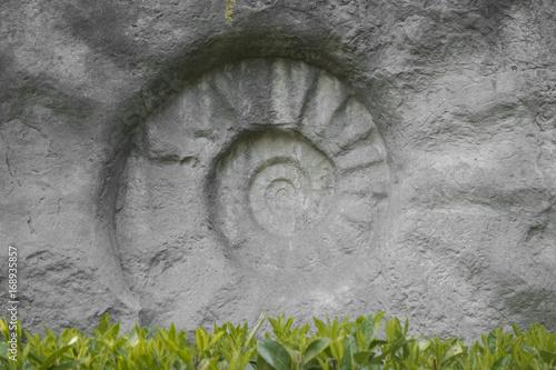 Staande foto Spiraal Spirale Fossil Stein Kringel