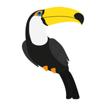 Toucan The Bird Isolated On Th...