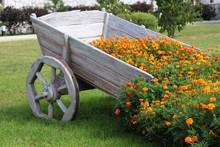 Yellow Flowers, Cart, Landscap...